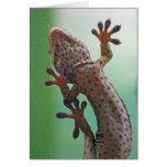 Tarjeta del Gecko