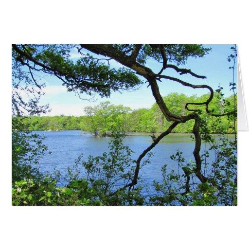 Tarjeta del ~ Gnarly de la rama y de la charca