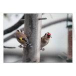 Tarjeta del Goldfinch