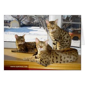 Tarjeta del grupo del gato de la sabana
