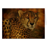 Tarjeta del guepardo