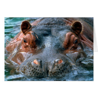 Tarjeta del Hippopotamus 1-Greeting