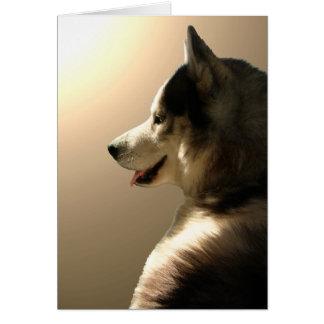 Tarjeta del husky siberiano/tarjeta del Malamute d