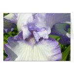 Tarjeta del iris barbudo