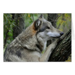 Tarjeta del lobo gris