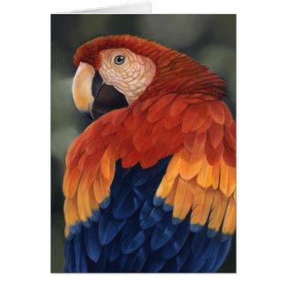 Tarjeta del Macaw