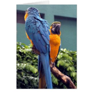 Tarjeta del Macaw del azul y del oro