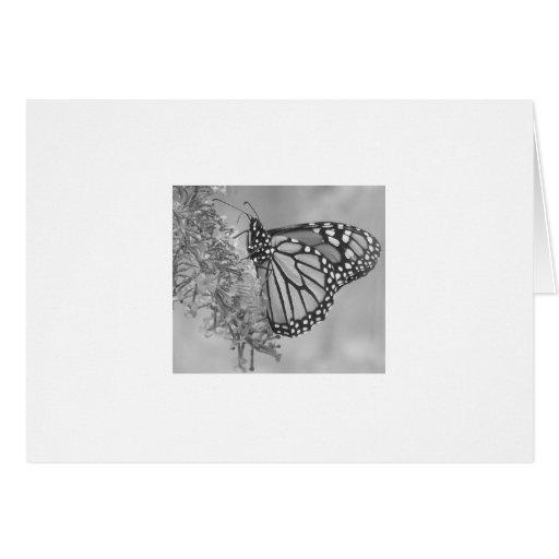 Tarjeta del monarca