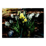 Tarjeta del narciso de la primavera