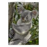 Tarjeta del oso de koala 2