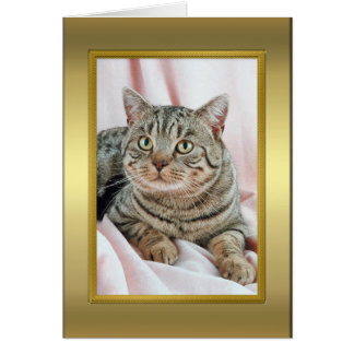 Tarjeta del pedigrí del gato