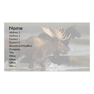 tarjeta del perfil o de visita, chapoteo de los tarjetas de visita