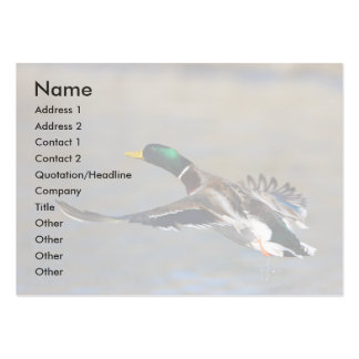 tarjeta del perfil o de visita, pato tarjetas de visita grandes