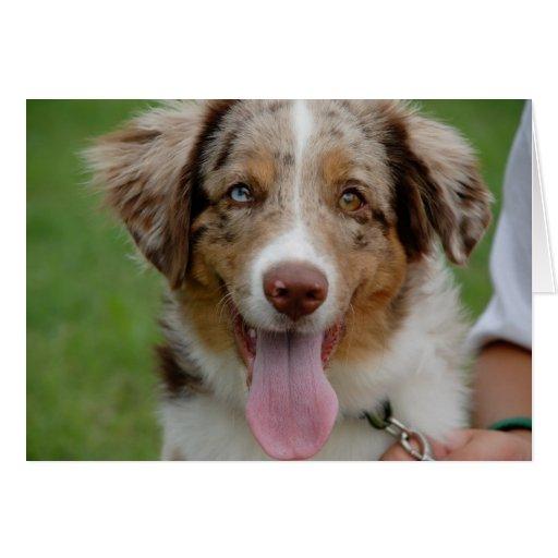 tarjeta del perro