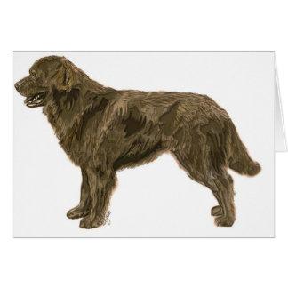 Tarjeta del perro de Brown Terranova