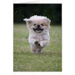 Tarjeta del perro de Pekingese, tarjeta de nota li