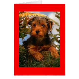 Tarjeta del perro de perrito de Airedale Terrier d