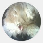 Tarjeta del perro etiqueta redonda