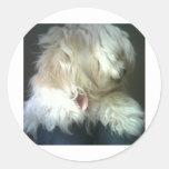 Tarjeta del perro pegatinas redondas