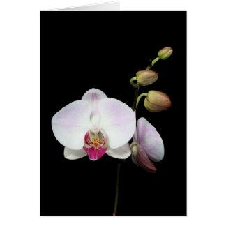 "Tarjeta del ""Phalaenopsis"""