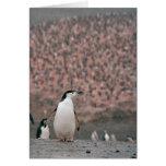 Tarjeta del pingüino de Chinstrap