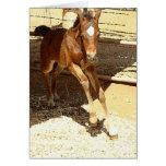 Tarjeta del potro del caballo del bebé