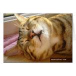 Tarjeta del profundo-sueño del gato de la sabana