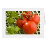 Tarjeta del racimo del tomate