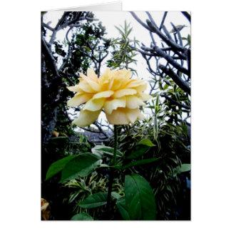tarjeta del rosey