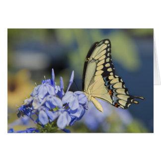 Tarjeta del saludo/de nota de la mariposa de Swall