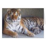 Tarjeta del tigre