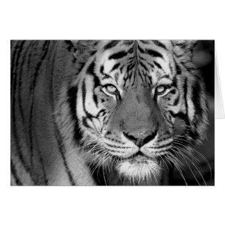 Tarjeta del tigre #1-Greeting de Amur