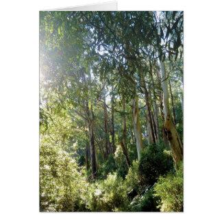 """Tarjeta diaria fotográfica del bosque del Lyrebir"