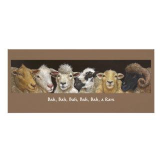 Tarjeta divertida de las ovejas comunicados