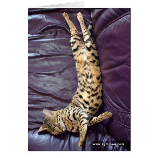 Tarjeta el dormir del gato de la sabana
