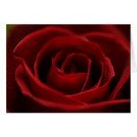 Tarjeta en blanco apacible del rosa rojo