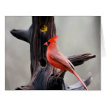 Tarjeta en blanco cardinal de la extra grande