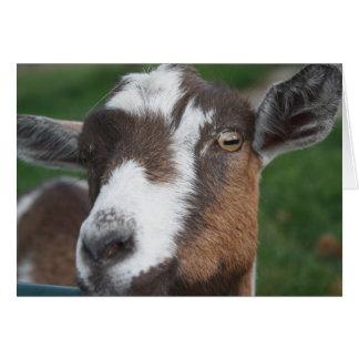 Tarjeta en blanco de la cabra