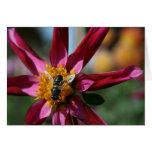 Tarjeta en blanco de la dalia y de la abeja