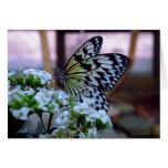 Tarjeta en blanco de la mariposa