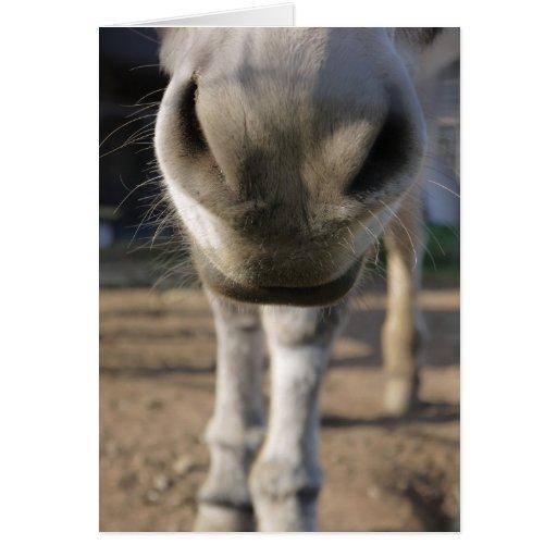 Tarjeta en blanco de la nariz borrosa del burro