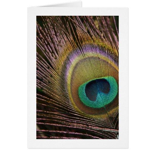 Tarjeta en blanco de la pluma del pavo real