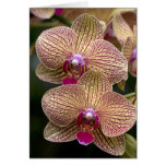 Tarjeta en blanco de las orquídeas de Vanda
