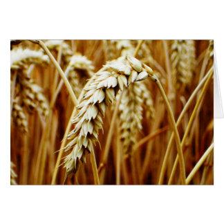 Tarjeta en blanco del campo de trigo