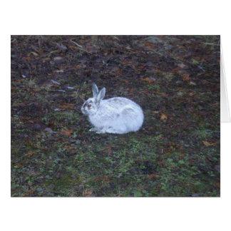 Tarjeta en blanco del conejo