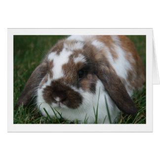 Tarjeta en blanco del conejo de Holanda Lop
