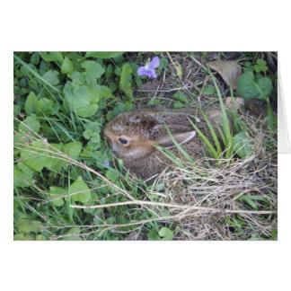 Tarjeta en blanco del conejo del bebé