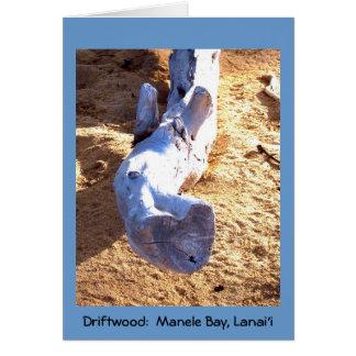 Tarjeta en blanco del Driftwood hawaiano de la pla
