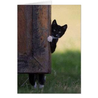 ¡Tarjeta en blanco del gato - condolencia, gracias Tarjeta De Felicitación