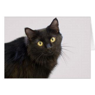 Tarjeta en blanco del gato negro por el foco para